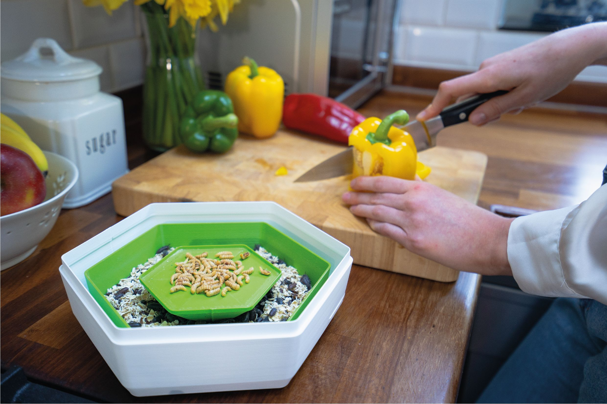 Insect farm as alternative protein in kitchen