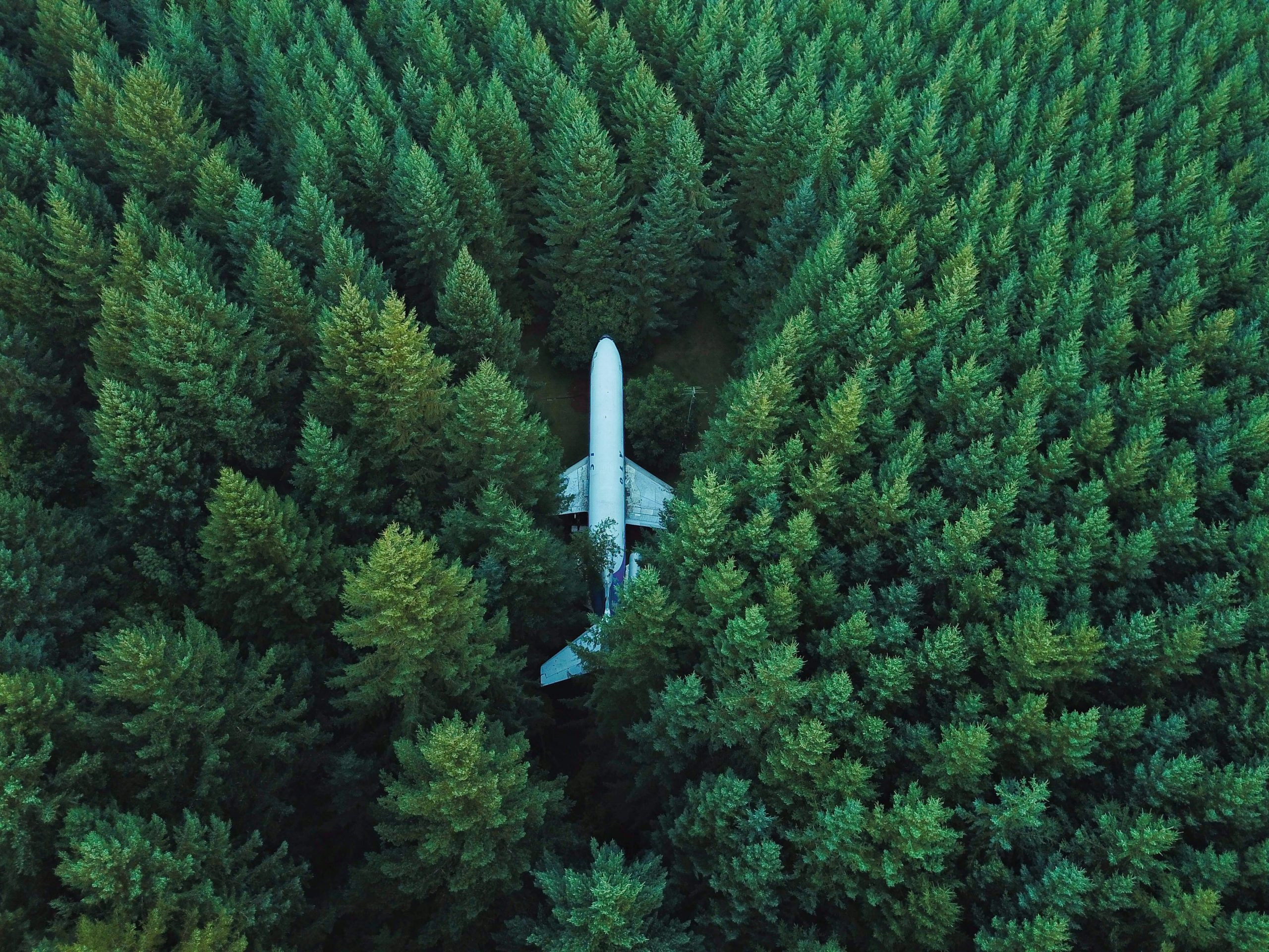Airplane flight free green pr company environmental pr forest