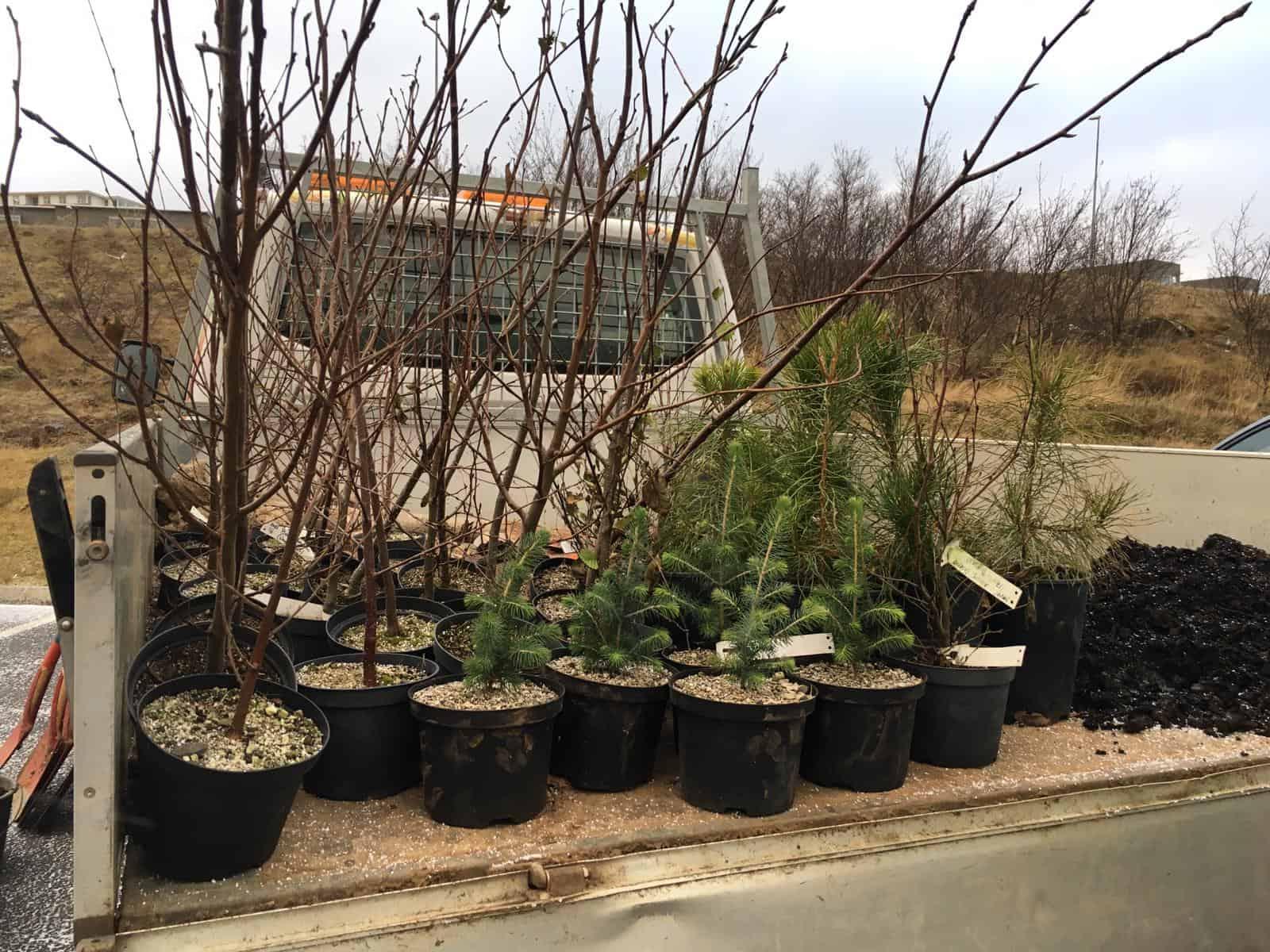 Planting trees in Reykjavíc for Climathon 2019