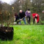 1 million people need to plant trees, to meet UK targets