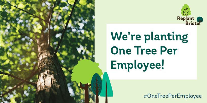 Replant bristol one tree per employee